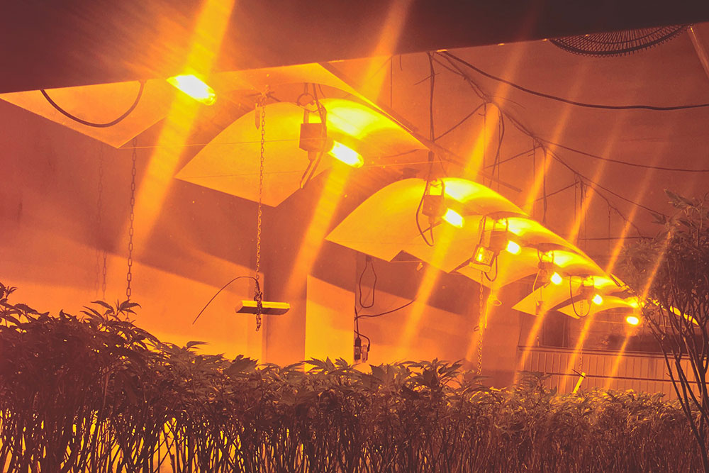 Control grow lights in a greenhouse