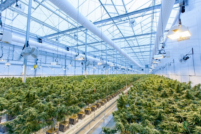 Commercial cannabis greenhouse facility